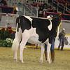 Royal16_Holstein_21M9A0206
