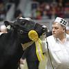 Royal16_Holstein_21M9A0179