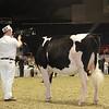 Royal16_Holstein_1M9A9924