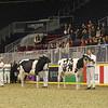 Royal16_Holstein_1M9A9923