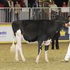Royal16_Holstein_21M9A0297