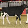Royal16_Holstein_21M9A0296