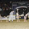 Royal16_Holstein_21M9A0322