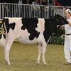 Royal16_Holstein_21M9A0306