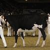Royal16_Holstein_21M9A0010