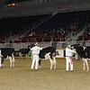 Royal16_Holstein_21M9A0041
