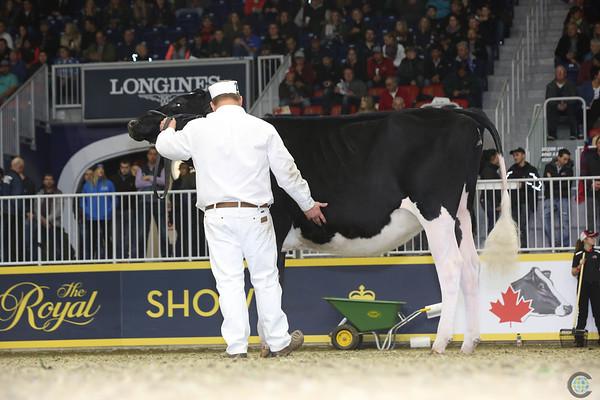 Royal16_Holstein_L32A4148