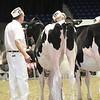 Royal16_Holstein_L32A3886