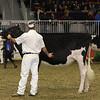 Royal16_Holstein_21M9A0057
