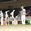 Royal16_Holstein_L32A3934