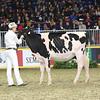 Royal16_Holstein_L32A4136