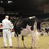 Royal16_Holstein_1M9A9931