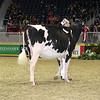 Royal16_Holstein_L32A4061