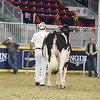 Royal16_Holstein_L32A4084