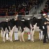 Royal16_Holstein_21M9A0035
