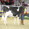 Royal16_Holstein_21M9A0187
