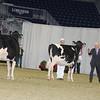Royal16_Holstein_21M9A0209