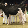 Royal16_Holstein_21M9A0120