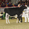 Royal16_Holstein_21M9A0313