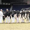 Royal16_Holstein_L32A3972