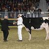 Royal16_Holstein_L32A4166