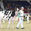 Royal16_Holstein_L32A3923