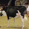Royal16_Holstein_21M9A0108