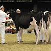Royal16_Holstein_21M9A0128