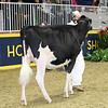 Royal16_Holstein_L32A3949