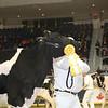 Royal16_Holstein_L32A4064