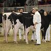 Royal16_Holstein_21M9A0231