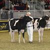 Royal16_Holstein_21M9A0283