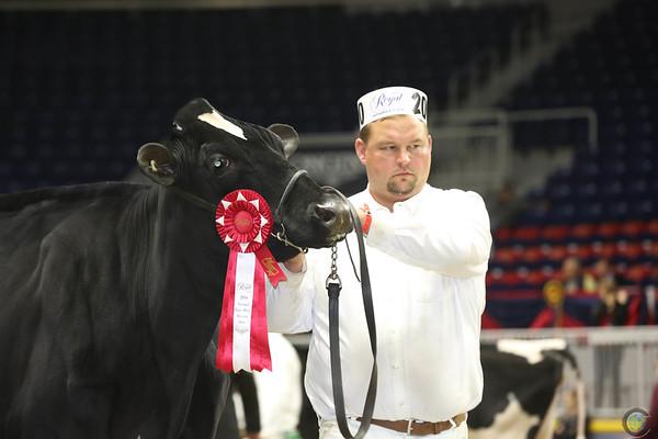 Royal16_Holstein_L32A4006