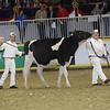 Royal16_Holstein_21M9A0154