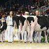 Royal16_Holstein_L32A4089