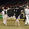 Royal16_Holstein_21M9A0141