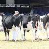 Royal16_Holstein_L32A3970