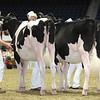 Royal16_Holstein_L32A3879