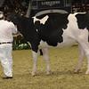 Royal16_Holstein_21M9A0116