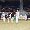 Royal16_Holstein_L32A3926