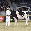Royal16_Holstein_L32A4137