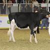 Royal16_Holstein_21M9A0298