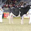 Royal16_Holstein_L32A4026