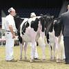 Royal16_Holstein_L32A3878
