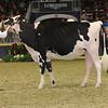 Royal16_Holstein_21M9A0119