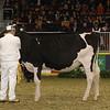Royal16_Holstein_21M9A0053