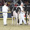 Royal16_Holstein_L32A4117