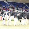 Royal16_Holstein_L32A3908