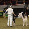 Royal16_Holstein_21M9A0045
