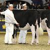 Royal16_Holstein_L32A4120